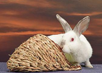adopt a rabbit in Georgia Alberto