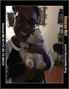 adopt a rabbit in Georgia Tiny