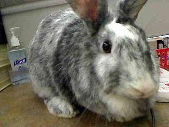 adopt a rabbit in Nebraska Kendra