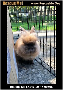 adopt a rabbit in New Jersey Simba