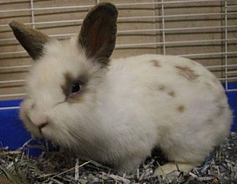 adopt a rabbit in North Carolina Sire