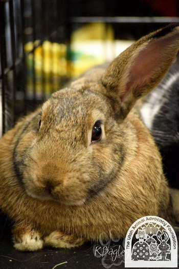 adopt a rabbit in Utah Peter