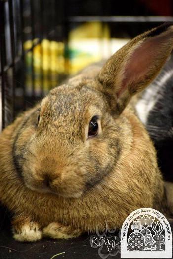 adopt a rabbit in Utah Peter