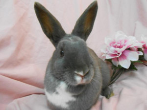 adopt a rabbit in michigan alessandra