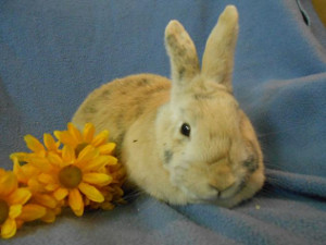 adopt a rabbit in michigan avalina