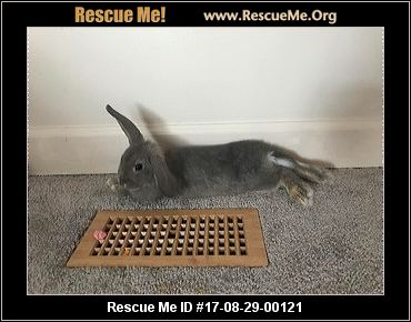 adopt a rabbit in ohio branch and pete