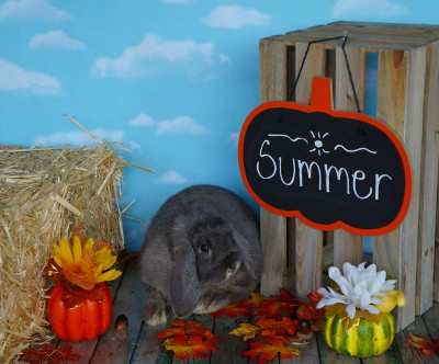 adopt a rabbit in ohio summer