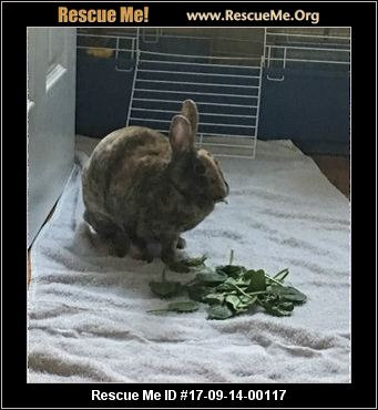 adopt a rabbit in North Carolina Coffee