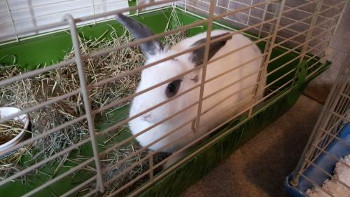 adopt a rabbit is North Carolina Delilah