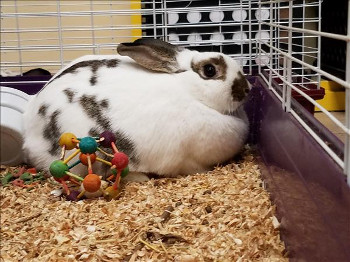 adopt a rabbit in Alabama Lilly