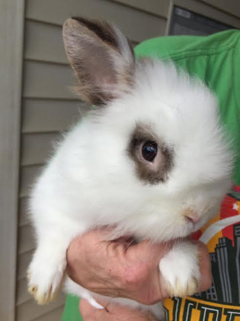adopt a rabbit in Alabama Merrill