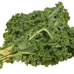 can rabbits eat Kale rabbits life