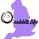 buy and adopt a rabbit in england birmingham