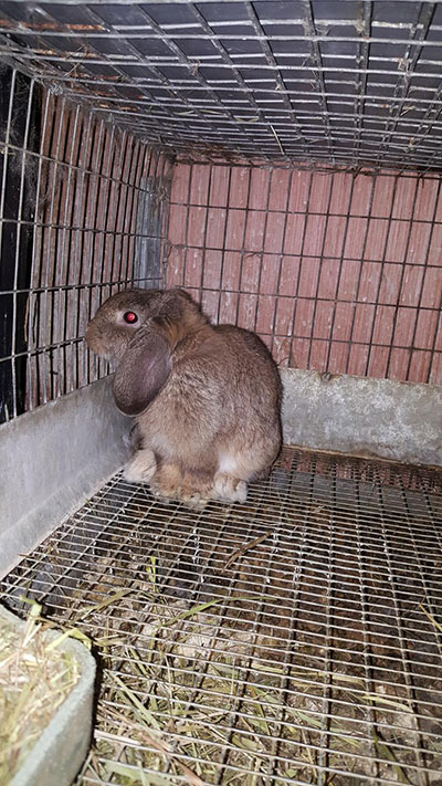 buy a rabbit in massachusetts8