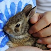 How To Safely Carry and Transport a Rabbit – Part One
