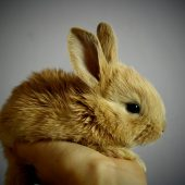 The Most Common Rabbit Health Problems – Part Two