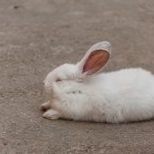Rabbit Sleeping Patterns and Daily Routine