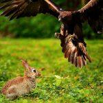 rabbit survival instincts and senses