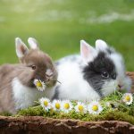 10 reasons why rabbits make good pets