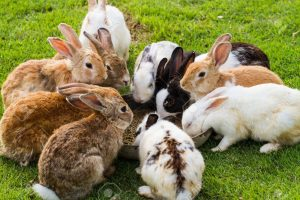 Can I Feed My Rabbit Dried Fruit? - Rabbits Life