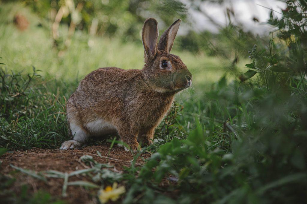 taking-care-of-older-rabbits