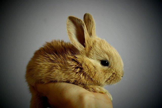 how-rabbits-mate